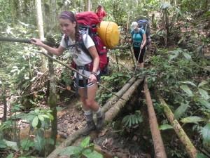 Observing jungle biodiversity
