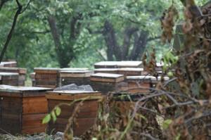 Beehives in Bei Gou