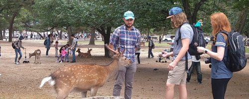 This photo was taken as several CCU students interacted with one of the famous deer that roam the Buddhist temple grounds and parks in Nara, Japan.